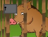 Rescue The Forest Hog