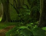 Amazon Jungle Fun Escape