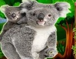 Top10 Rescue The Koala