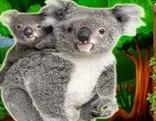 Top10 Rescue The Koala