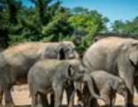 Amazing Zoo Escape