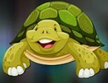 Avm Sulcata Tortoise Escape