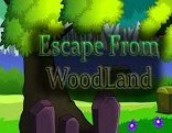 Top10 Escape From Wood Land
