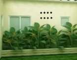 Tropical Indoor Garden Escape