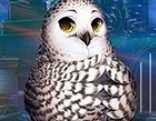 G4K Lovely Owl Escape