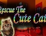 Top10 Rescue The Cute Cat