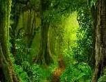 FUN Rainforest Escape