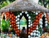FUN Thanksgiving Pumpkin Escape