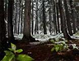 FUN Snow Forest Fun Escape
