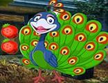 G4K Joyous Peacock Escape