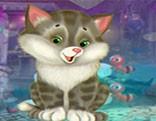 G4K Graceful Kitten Escape