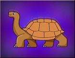 G2J Galapagos Tortoise Escape