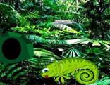 G2R Chameleon Rain Forest Escape