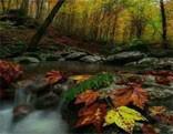 Leaf Veil Forest Escape HTML5