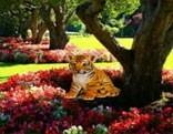 Wow Garden Tiger Cub Escape