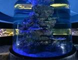Wow Father Son Aquarium Escape