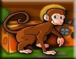 G2J Rhesus Macaque Escape
