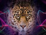 Little Cheetah Rescue