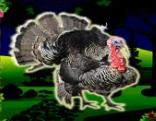 Top10 Rescue The Turkey